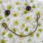 Солнечная улыбка