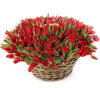 Красные тюльпаны в корзине