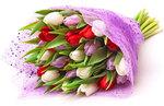31 микс тюльпан
