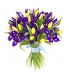 ирисы с тюльпанами .